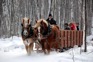 Winter sleigh rides through the orchards in Door County, Wisconsin